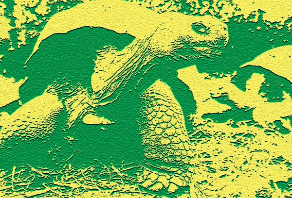 Die Insel als Schutzraum: Galapagos-Schildkröte