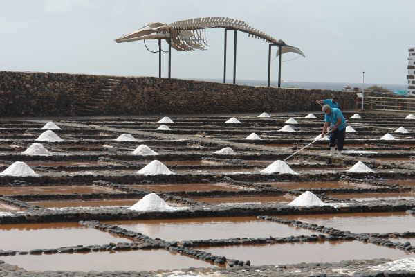 Auf Fuerteventura wird hochwertiges Salz gewonnen, das selbst in der Gourmetküche hoch geschätzt  wird