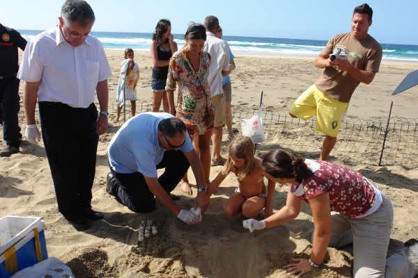 Ein seit Jahren laufendes Projekt versucht die Karettschildkröte auf der Insel wieder heimisch zu machen. Hunderte Eier von den Kapverden werden im warmen  Sand vergraben und bis  zum Schlüpfen beschützt.