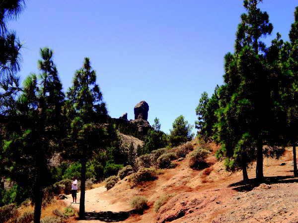 Natur pur rund um den markanten Roque Nublo