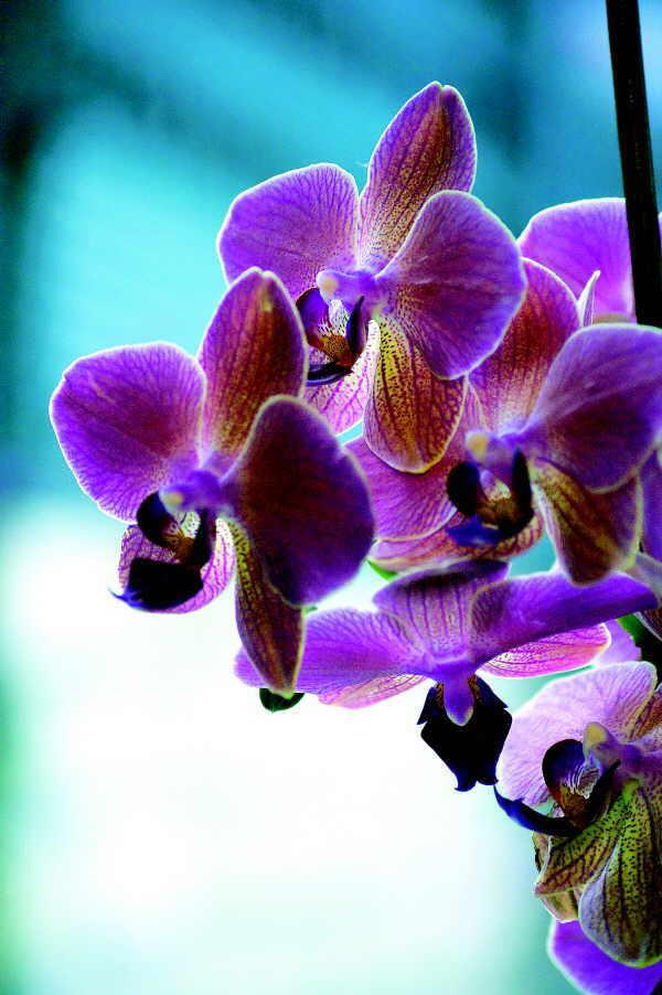 Auch Orchideen gelten als Beauty-Geheimwaffe
