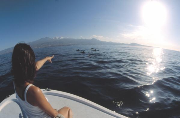 Glücksgefühle werden wach, wenn man die freilebenden Delfine und Wale im Atlantik springen und schwimmen sieht.