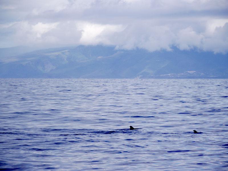 Walflossen vor La Gomera