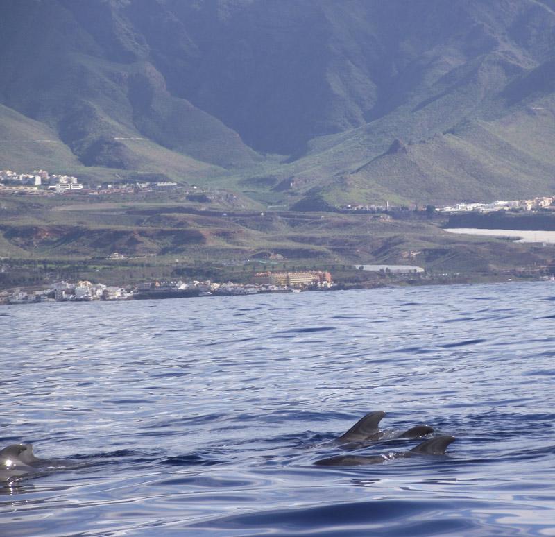 Teneriffa-Süd; Walflossen und Berge