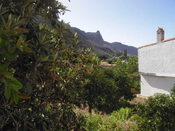 Bislang war die Gegend um Fataga vor allem für Zitrusfrüchte und Kernobst bekannt.