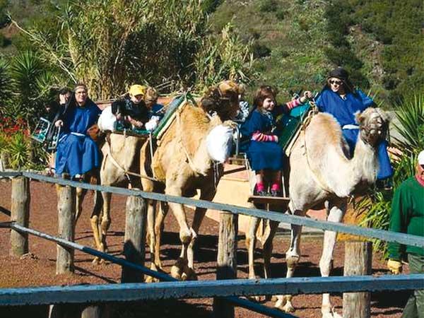 Auf den Kanaren schaukeln die Kamele heutzutage vor allem Urlauber auf ihrem Rücken.