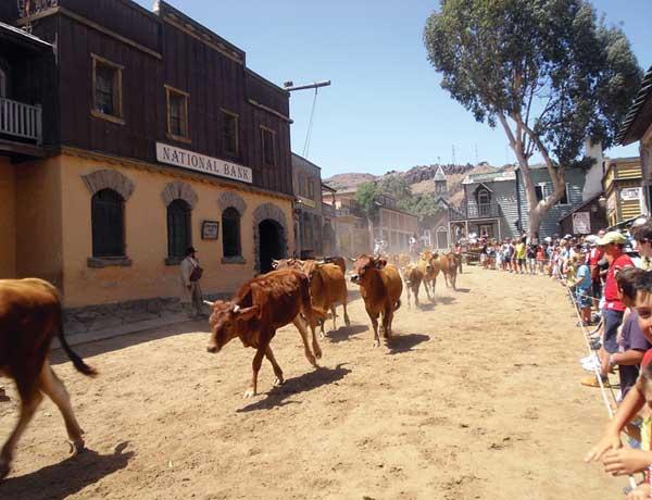 Eine Rinderherde rennt im Galopp über die Hauptstraße.