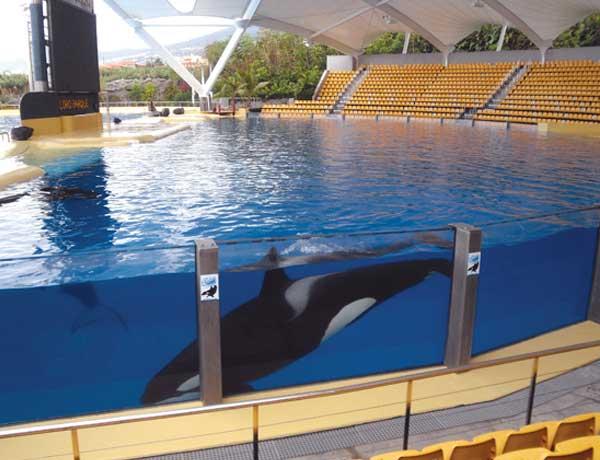 Die Orcas des Loro Parques lieferten wichtige Vergleichswerte für die Studie.