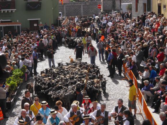 Ein Tier- und Menschenlauf zur Fiesta in Los Silos