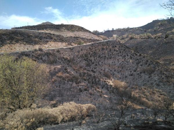 In dieser Gegend nahm der verheerende Waldbrand seinen Anfang.