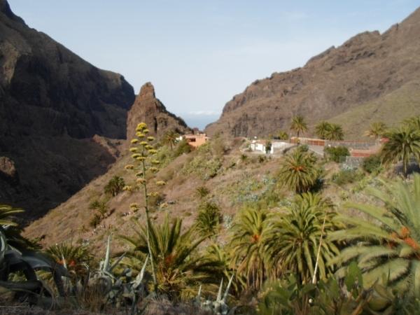 Die Mascaschlucht zählt nach dem Teide zu den beliebtesten und meist besuchten Orten der Urlauber.
