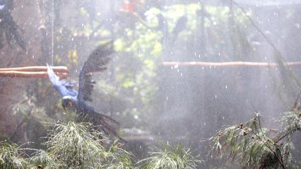 Regen im Papageiengehege