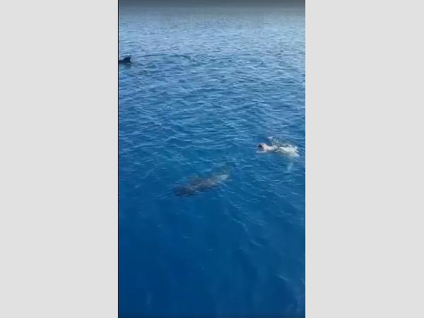 César Espino Reyes hat keine Angst vor großen Meeressäugern und ist nun schon zum zweiten Mal als Retter in der Not, zur richtigen Zeit an der richtigen Stelle.