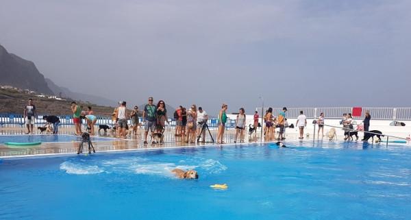 Die Hunde hatten viel Spaß beim Spiel im Pool.