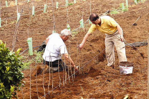 So lasst uns denn ein Apfelbäumchen pflanzen – so lautete die Devise der künftigen Apfelbauern.