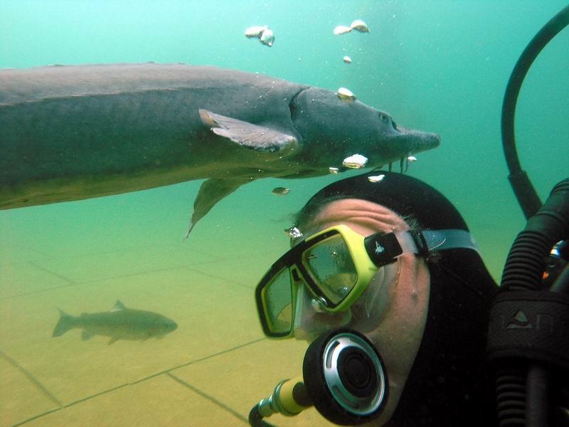 NaturaGart Deutschland GmbH & Co KG Bei den Tempelwächtern halten sich oft über 20 Störe auf, manche knapp 1,5 m lang. Die haiähnlichen Fische haben ein harmloses Saugmaul und sind völlig zahm.